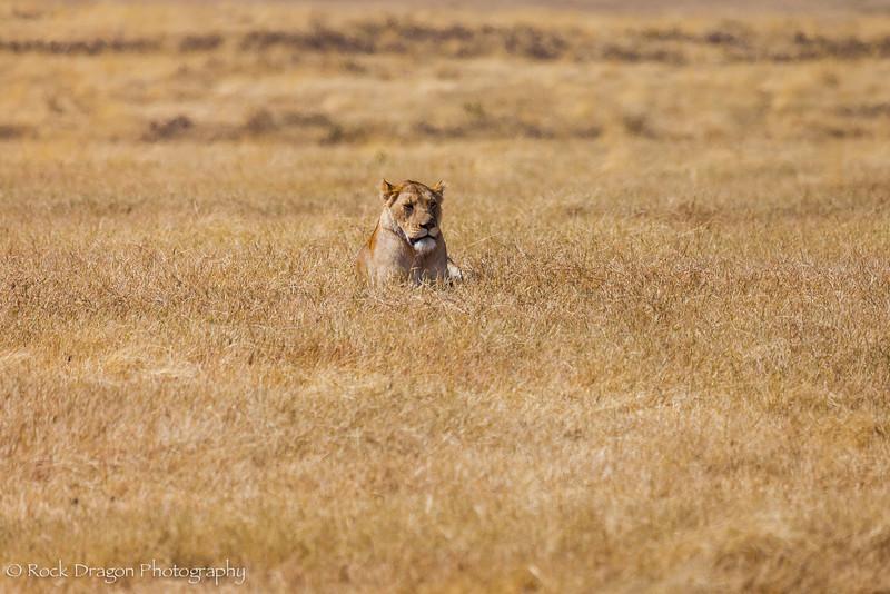 Ngorongoro-21.jpg