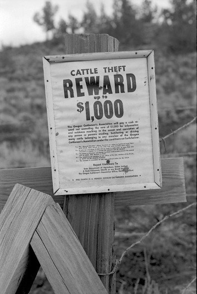 In the wild west of rural Oregon stealing cattle is still an issue. OR
