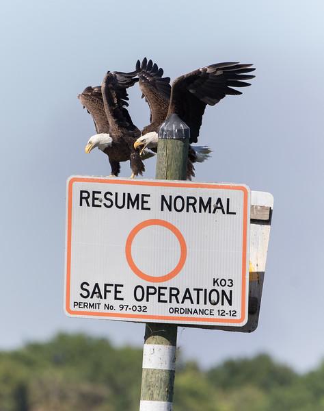 Eagle Sign-3120.jpg