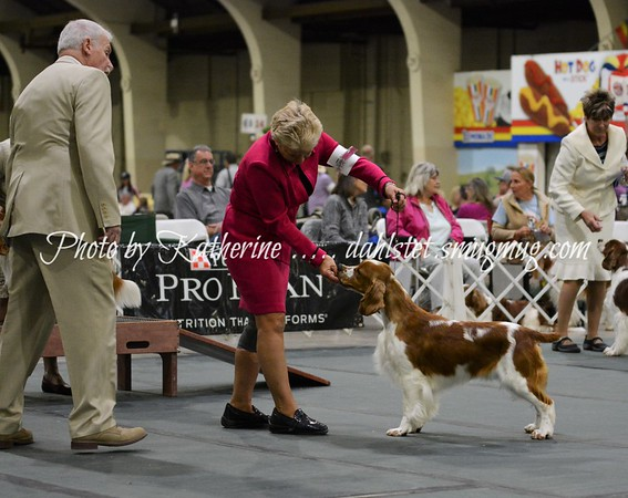 WSSCA 2018 - National Specialty - Class Judging/Sat 26May