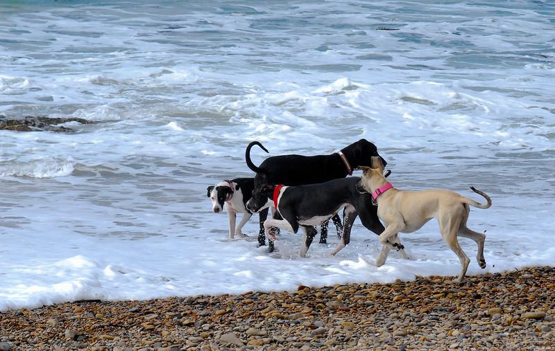 dogs_beach-016.jpg
