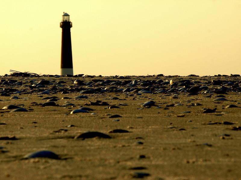 shells lighthouse.jpg