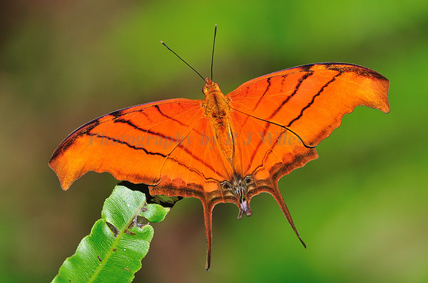 Insects Butterflys Dragonflys