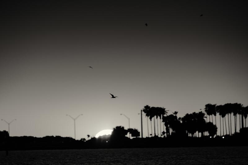 Tampa Bay sunset birds-1.jpg