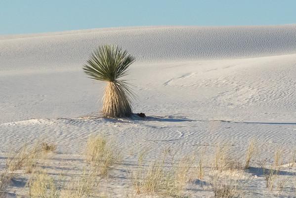 Explore New Mexico