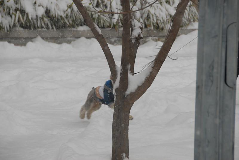 [20100103] 1st 2010 Snow in Beijing (90).JPG