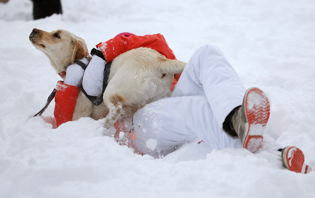 . Mia Stein tackles her Labrador Frankie in the snow during a break in a winter storm, at a park in Boulder, Colo., Thursday, Jan. 5, 2017. A winter storm dropped several feet of snow in the Colorado high country, and over a foot in Front Range communities. (AP Photo/Brennan Linsley)