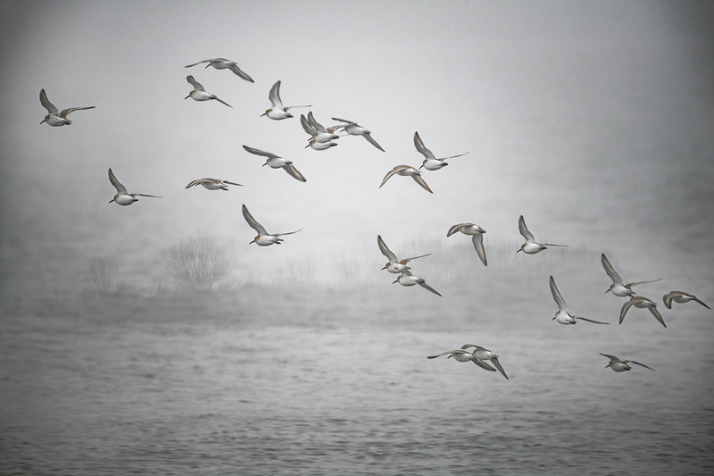 Misty Shorebirds