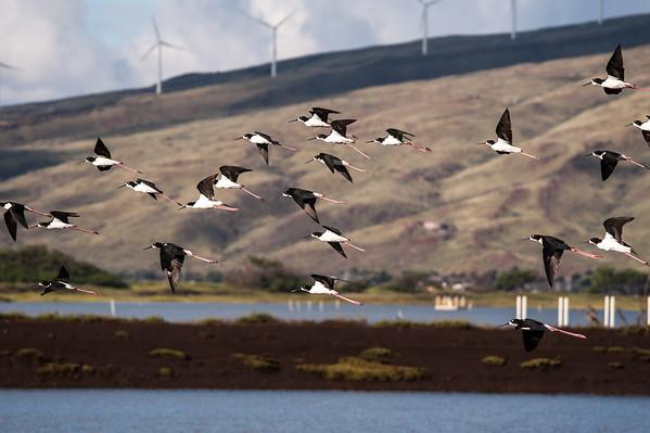 Kealia Pond's Wildlife