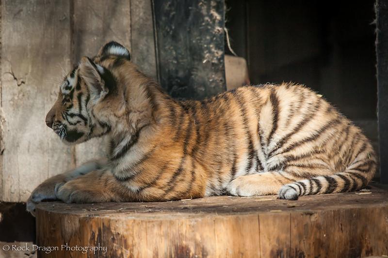zoo_july_2012-31.jpg