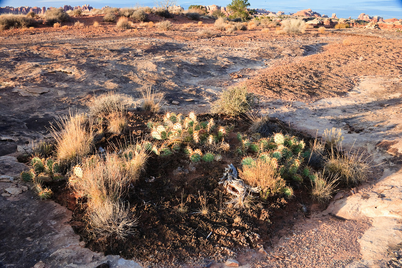 Minature rock garden of cactus and grasses growing in filled in pothole.