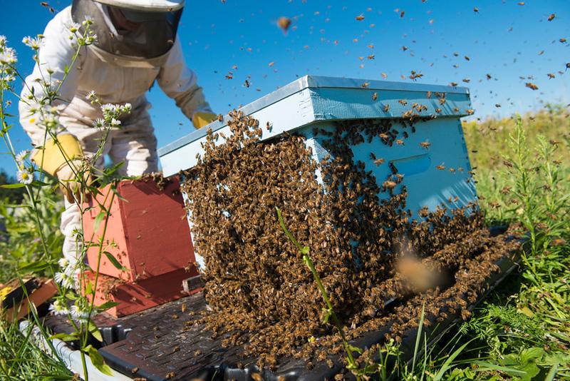 Bee Shoot_FB-164.jpg