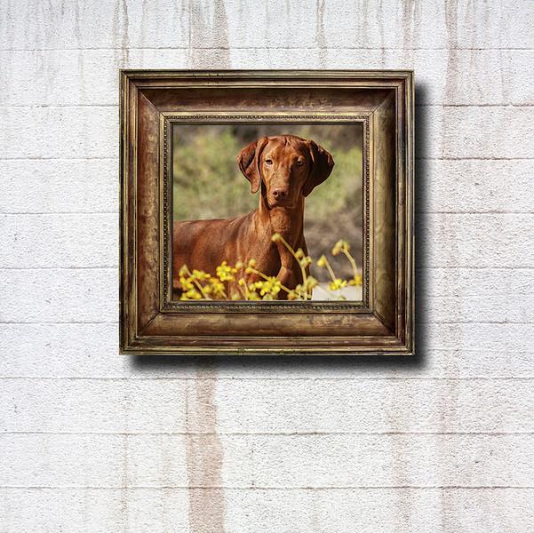 frame_canstockphoto20891350.jpg