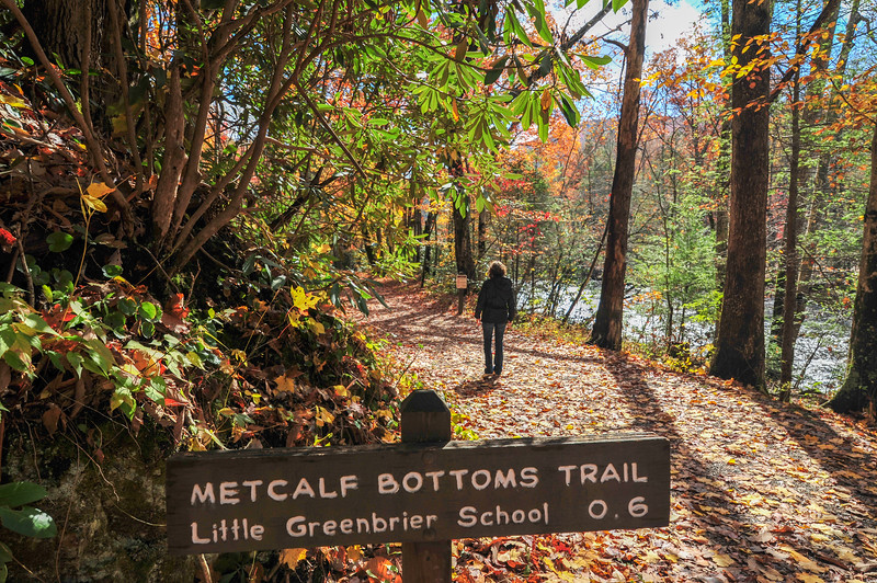 Hiking trail surrounded by colorful fall foliage in Great Smoky Mountains National Park.