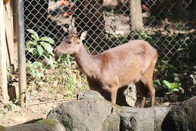Ninoy Aquino Wildlife Centre