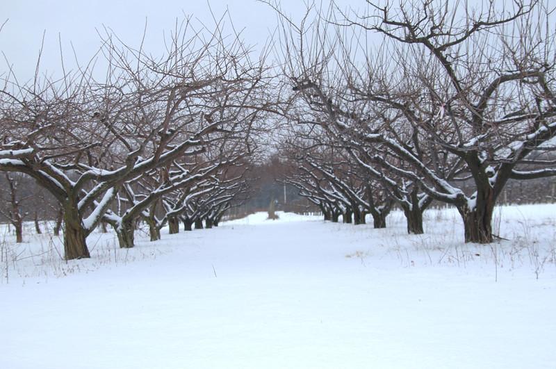 Easy Pickins Winter 008-1676783056-O.jpg
