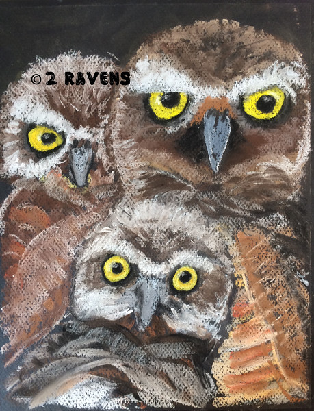 11x14 pastel, burrowing owls, SOLD