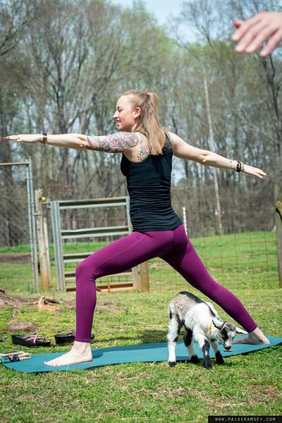 2018 (April) Goat Yoga - Split Creek Farms / 90 degree Yoga