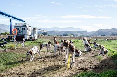2014 California Brittany Club Fall Trial, Puppy and Amateur Gun Dog