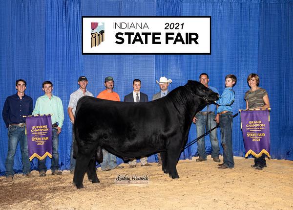 Open Cattle Show