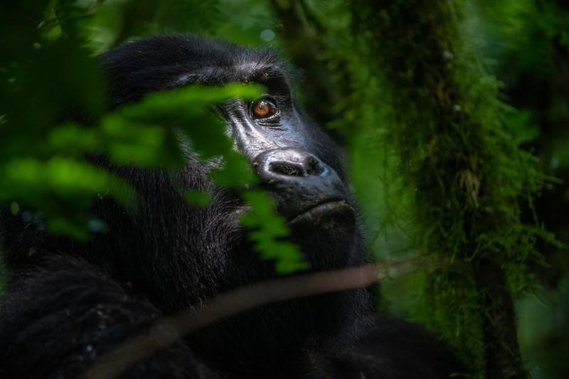 Uganda_T_Gor-1761.jpg