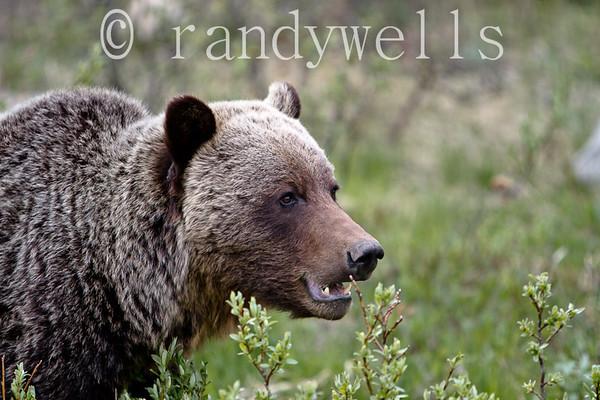 IMAGE: http://www.randywellsphotography.com/photos/i-hDM3hJj/0/L/i-hDM3hJj-L.jpg