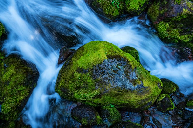 | Mt. Rainier National Park