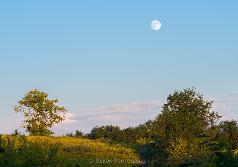 Full Moon over a Field of Goldenrod