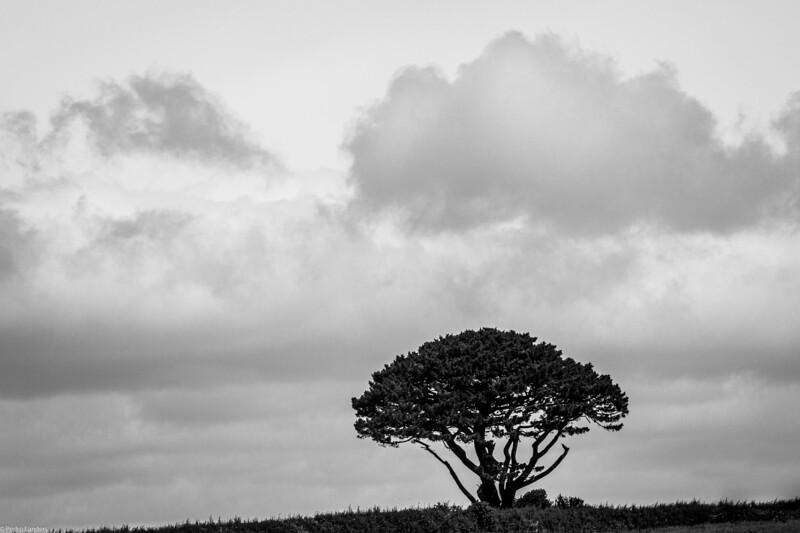 Tree and Cloud