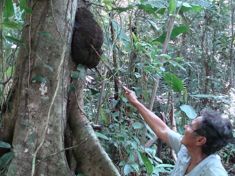 Dona Rosa stirring up a termite nest.