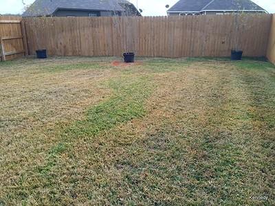 2015 12-18 Back yard
