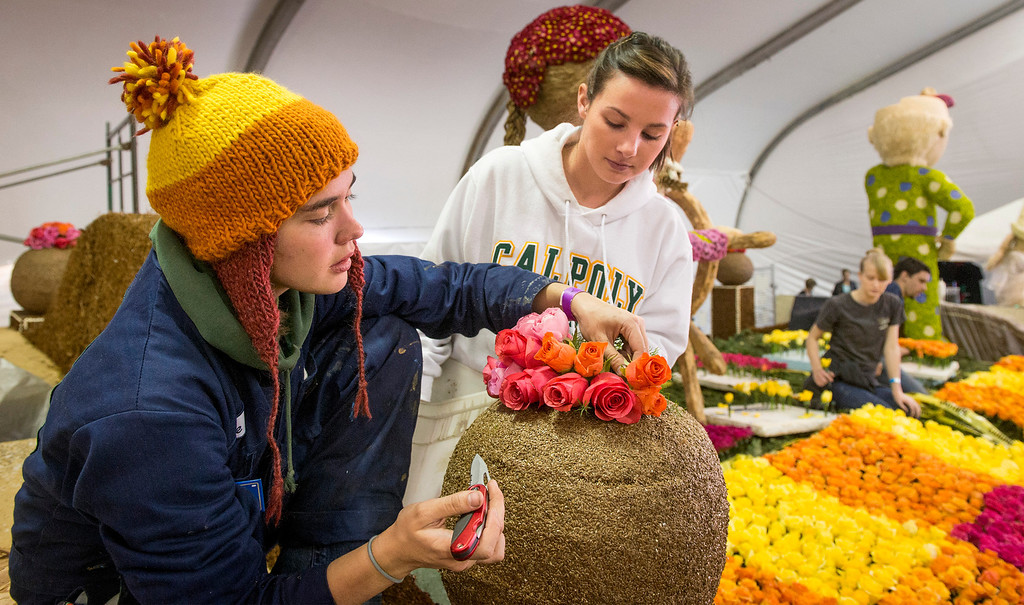 . Cal Poly SLO students Elise Willcox, 20, left, and Felicia Dito, 20, and volunteers apply flowers to the university\'s Rose Parade float which is a joint venture between the Pomona and San Luis Obispo campuses at the Brookside Pavilion in Pasadena, Calif. Dec. 30, 2013.   (Staff photo by Leo Jarzomb/Pasadena Star-News)