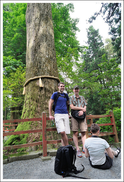 Suzan taking a picture of Jake and Chris near the sacred tree at Hakone Shrine.