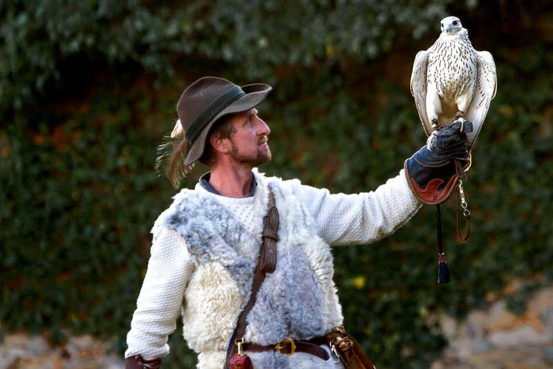 Falconry Show at Schloss Rosenburg, Austria