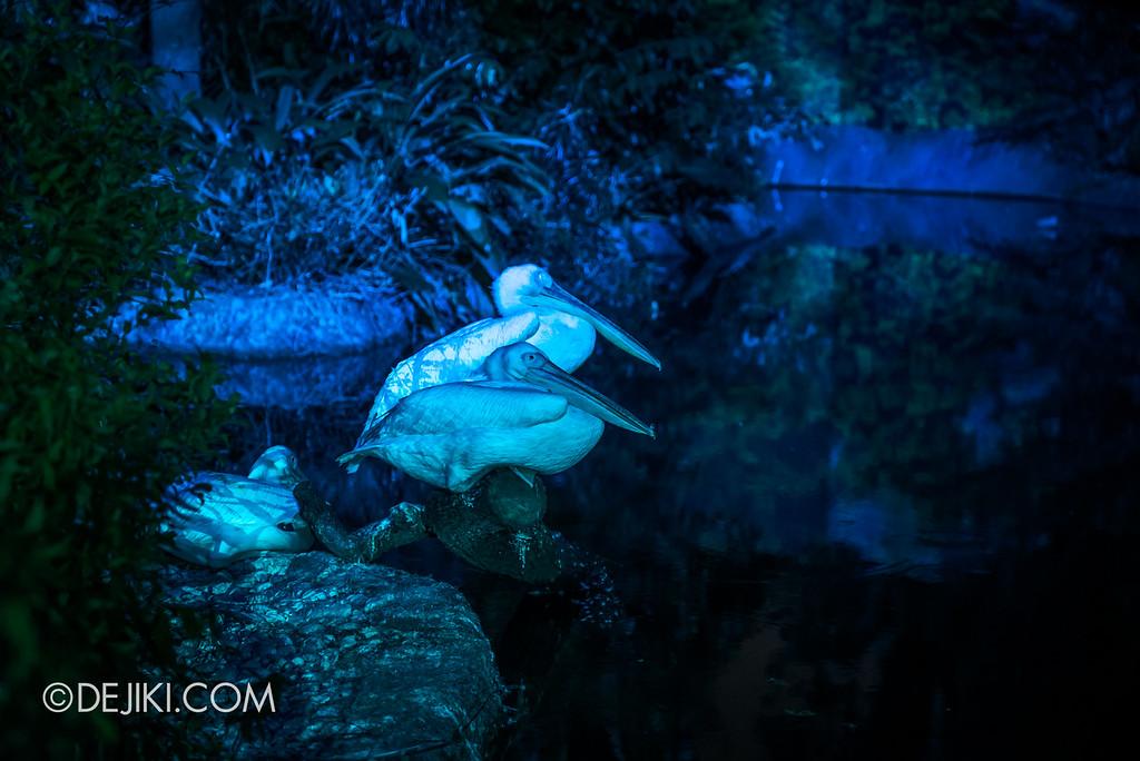 Singapore Zoo Rainforest Lumina - Water zone 3