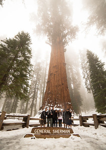 Sequoia National Park 2014