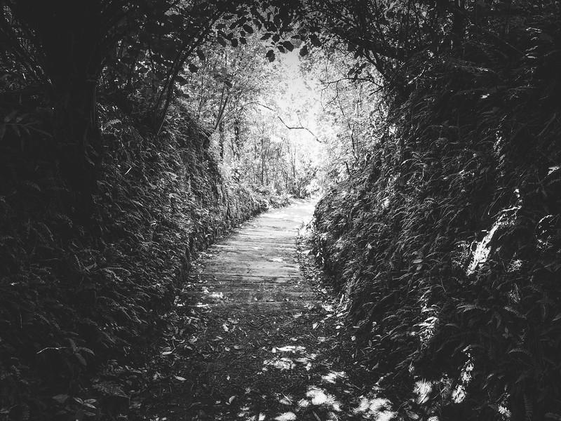 Path Into the Light