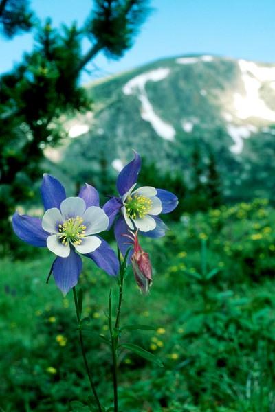 amh FLOWERS (1085).jpg