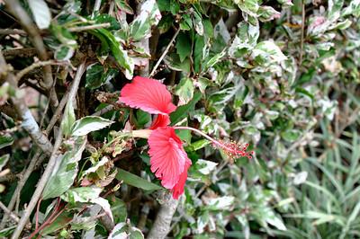Hawaii 2010 Sept 2
