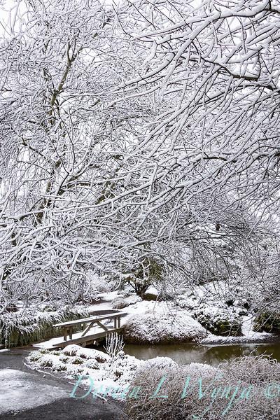 Monrovia landscape in snow_4017.jpg