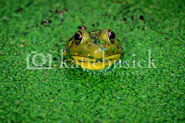 Frog/Flowers