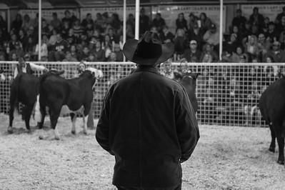 2016 Gerlach Livestock - Steers