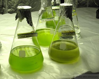 2009-10 Algae