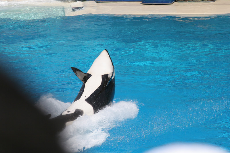 Seaworld with Anqi and Jane