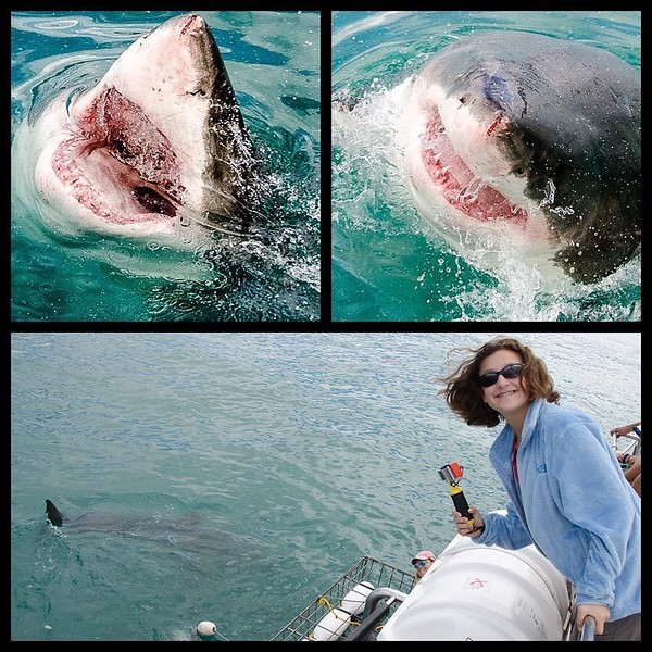 We're heading home from #CapeTown this week with a new appreciation for the ocean's apex predator: the #GreatWhiteShark. Inches from our face in the cold waters off Gansbaai, seeing these majestic (and often misunderstood) creatures up close is best defin