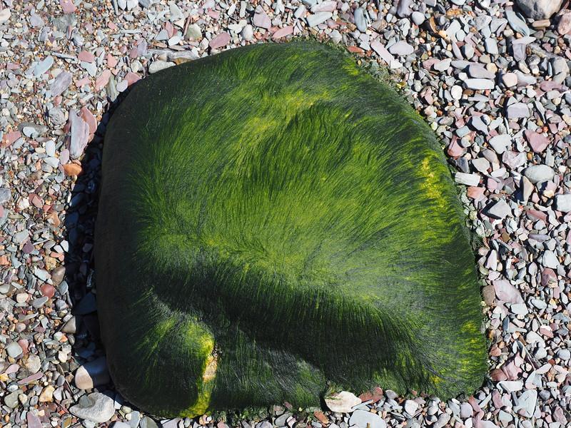 CR_Perruque végétale.JPG