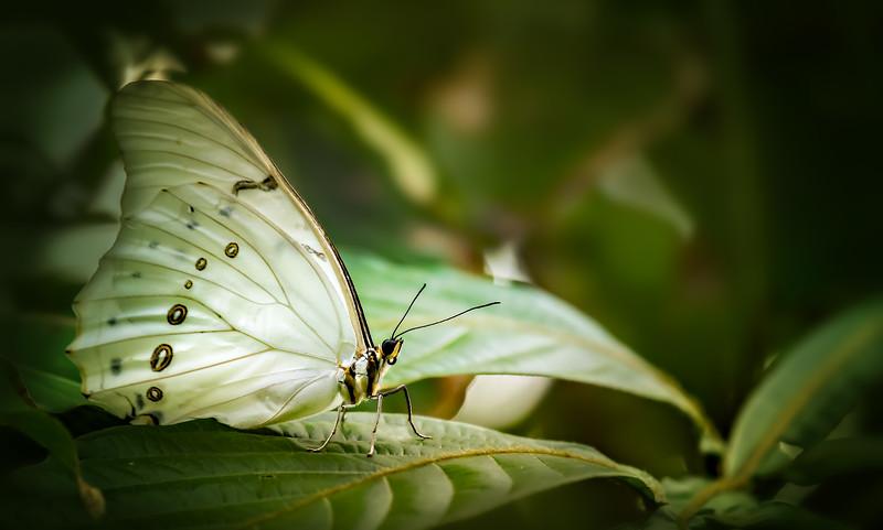 Butterfly-061.jpg