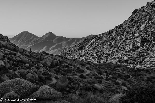 Arizona 2014, 2016