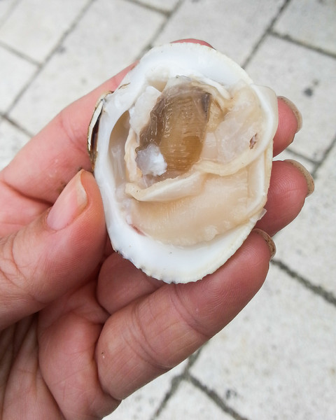 mussel 2.jpg