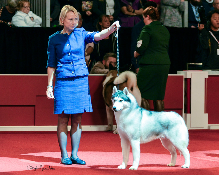 Siberian Husky - GCHP CH Sharin Nick Of Dynasty Rc Kennel - Working Group 3